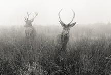 Wildling / Animal photography