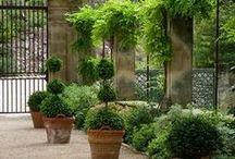 jardin provençal
