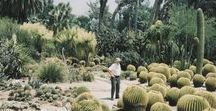 Life of the Cacti / Stuff that inspires the hell out of me... And...  Stuff I would like to own...
