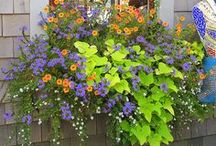 The Secret Garden / Love to get in the garden...it is such honest labor... / by Jill Gray