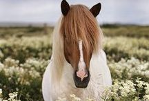 Beautiful Animals / by Amy's Pins
