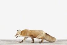 fox is back