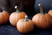 Zucca - Pumpkin / L'ortaggio dell'autunno