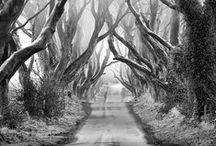 Trees / by Marlon Paul Bruin