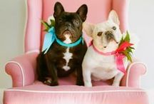 Doggies / by Amy's Pins