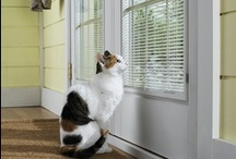 Pet friendly home / Love your pets? We do, too! Pella designs innovative windows and doors that help make your life easier, including pet-friendly details. Visit Pella.com to learn more about Pella Windows and Doors. / by Pella Windows and Doors