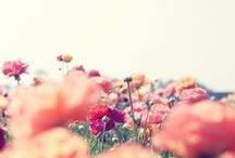 flower power ✿ ✿ ✿ / it's all about flowers / by Carla Lemos