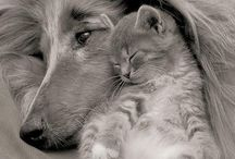Cats n Dogs / Such wonderful friends and companions --- I wish I could have them all ---  / by Yvette Garza
