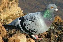 Pigeons / by Jill Gray