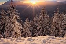 Winter Wonderland / by Peggy Read