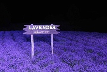 Lavender or Lavendar? / by Katy Sakai