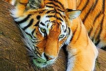 Ang's Photos - Animals / All creature and critter related photos!!!
