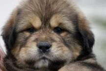 Puppy Love / by Kellie Smith