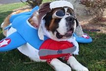 Dog Halloween Costumes / Some of our favorite Dog Halloween Costume Contest Photos from over the years. / by PupLife Dog Supplies