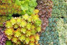 Living Wall & Succulents / by Lisa Yamagata
