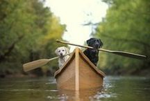 The Great Outdoors  / Experiencing adventure with our pups  / by PupLife Dog Supplies