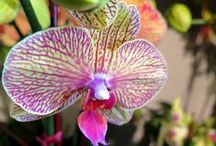 Orchids / Our most popular living plant arrangements are now just a click away from your doorstep.