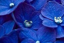 Color BLUE / #color #blue
