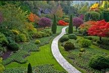 My (not so) secret garden