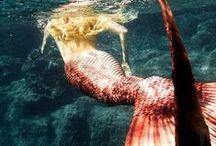 Mermaid... / by Caren Duaarte