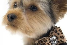 Fashionable Pet Little Details / Sometimes it's the little things... / by Donna Cruz