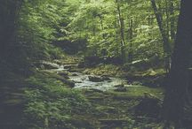 e x p l o r e / Greens Forests Forts Adventures
