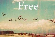 free-feathers-flight-flow