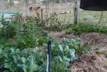 Eight Acres: Growing vegetables and fruit / food forest, perennial plants, herbs, unusual vegetables, structures and garden designs