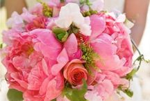 Flower: Peonies / by Rose of Sharon Floral Designs