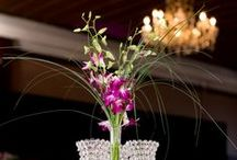 Flower: Orchids / by Rose of Sharon Floral Designs
