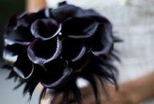 Color: Black / by Rose of Sharon Floral Designs