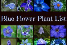 Color: Blue / by Rose of Sharon Floral Designs