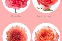 Color: Peach & Coral / by Rose of Sharon Floral Designs