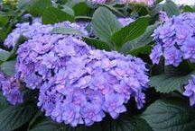 Varieties & flowers to remember!