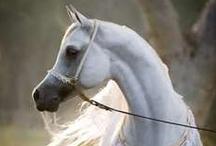 ♔ Horses