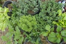 Herbs and natural remedies / How to grow and use herbs, and other natural remedies.  Find out more https://linktr.ee/eight_acres_liz