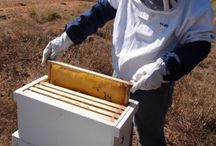 Natural beekeeping / Keeping bees naturally, without chemicals, and with minimum intervention, for honey, beeswax and pollination.  Find out more https://linktr.ee/eight_acres_liz