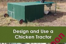 Chickens and chicken tractors / I love keeping a few backyard chickens in a chicken tractor.  What's a chicken tractor?  find out more in my ebook https://linktr.ee/eight_acres_liz