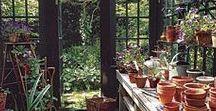 green house / plantenkas