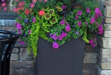 Garden / Garden Ideas / by Christy Sunna