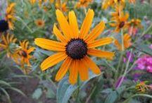 Perennials / by Wilderness Ties