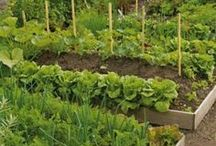 Plantes : Potager / Vegetable garden
