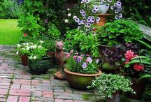 Garden & Outdoors / Garden beauty,ideas,how to,containers,patios and exterior decor. / by Jane Young