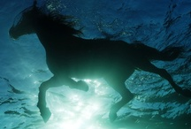 I have always, will always, love horses . . . / by Wendy Falk