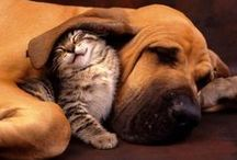 Dogs, cats and other animal love <3