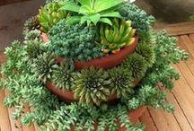 succulents.cacti