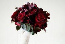 love / all things beautifully rosey & elegant