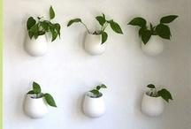 Gardening / Compost