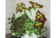 House Plants and Garden / by Nicole Zabel