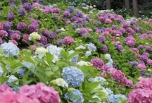 Gardens / Our love of flowers and plants extends to the outdoors.